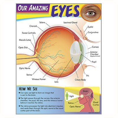 Learning Chart -our Amazing Eyes